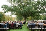 guests seated facing beautiful tree for ceremony